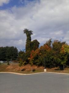 Oct 2013 tree dragon