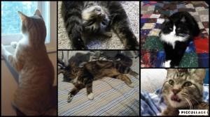 Cat Collage 2018-04-01 13_25_39